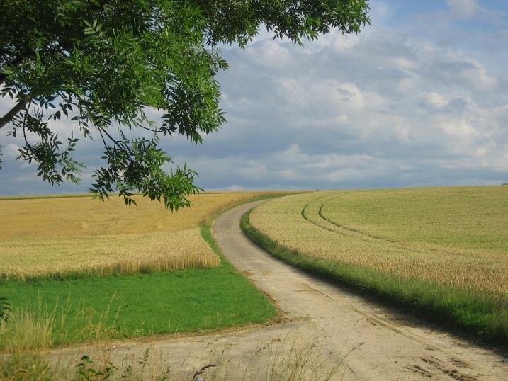 Bild_Landwirtschaft.jpg
