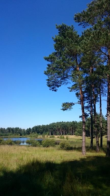 Bild_Natur2.jpg