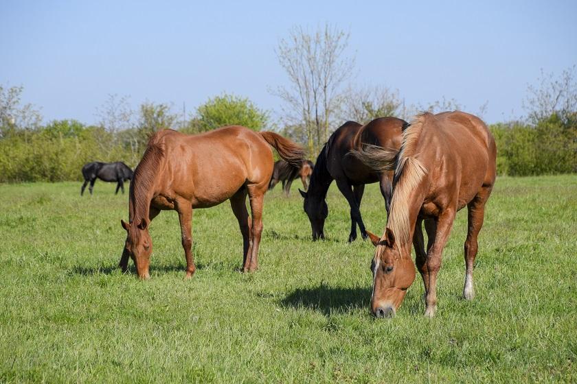 Bild_Pferd1.jpg